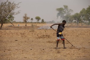 Senegal-land-ifpri-300x200