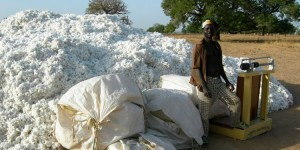 Burkina_Faso_cotton_harvest_in_Dourtenga_2008_1200x600-750x375
